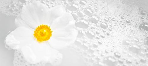 blommavatten2